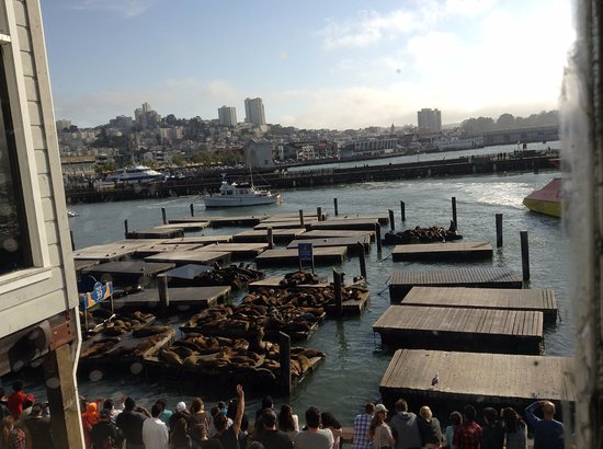The view - Sea Lions - Picture of Chart House, San Francisco