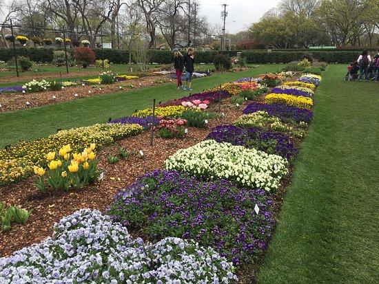 Sample Garden - Picture of Dallas Arboretum  Botanical Gardens - sample lawn and garden