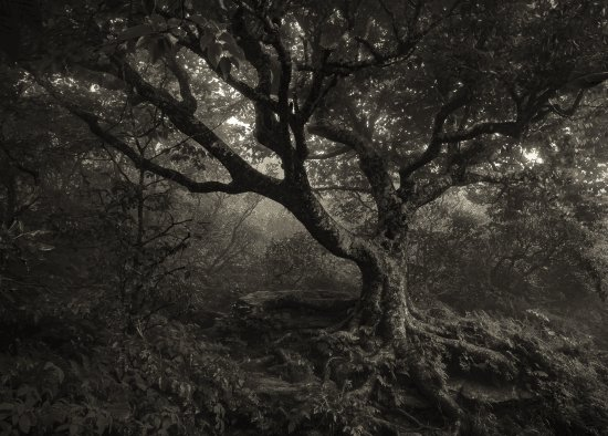 Spooky Fall Wallpaper Spooky Tree Along The Way Picture Of Craggy Gardens