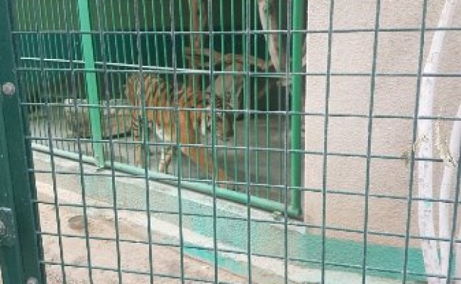 Dubai Zoo All You Need To Know Before You Go With Photos Tripadvisor