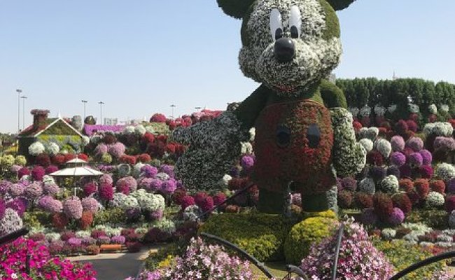Dubai Miracle Garden All You Need To Know Before You Go With Photos Tripadvisor