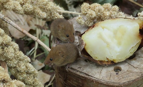 Cute mice - Picture of New Forest Wildlife Park, Ashurst - TripAdvisor
