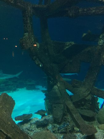 Shark Reef (Las Vegas) - 2019 All You Need to Know BEFORE You Go
