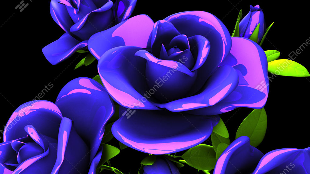 Blue Roses Bouquet On Black Background Stock Animation 11395643