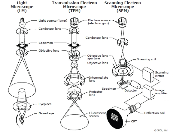 Microscopy for Materials Characterization Illuminating Structures