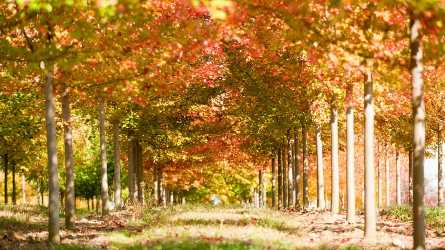 Fall Leaves Wallpaper Windows 7 Plant Trees In The Fall Angie S List