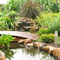 DIY tropical oasis in your backyard | Sunshine Coast Daily
