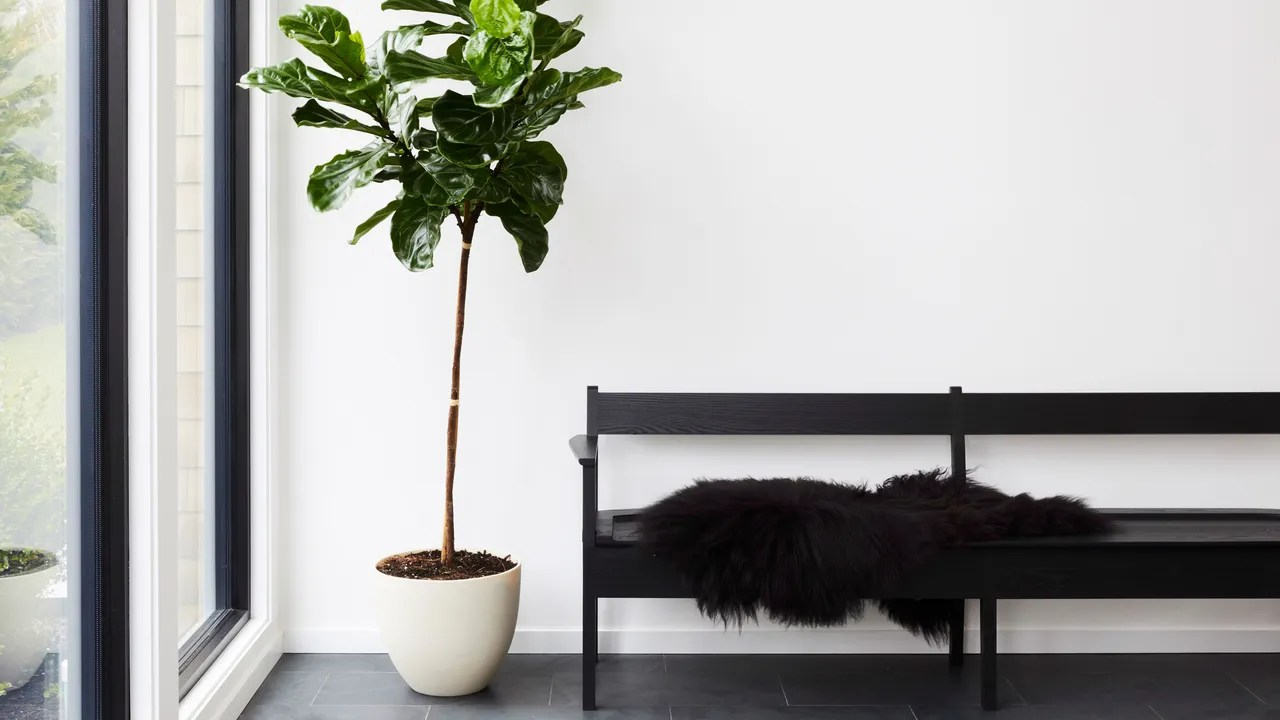 Indoor Plants 8 Best Indoor Plants How To Take Care Of Them Architectural Digest