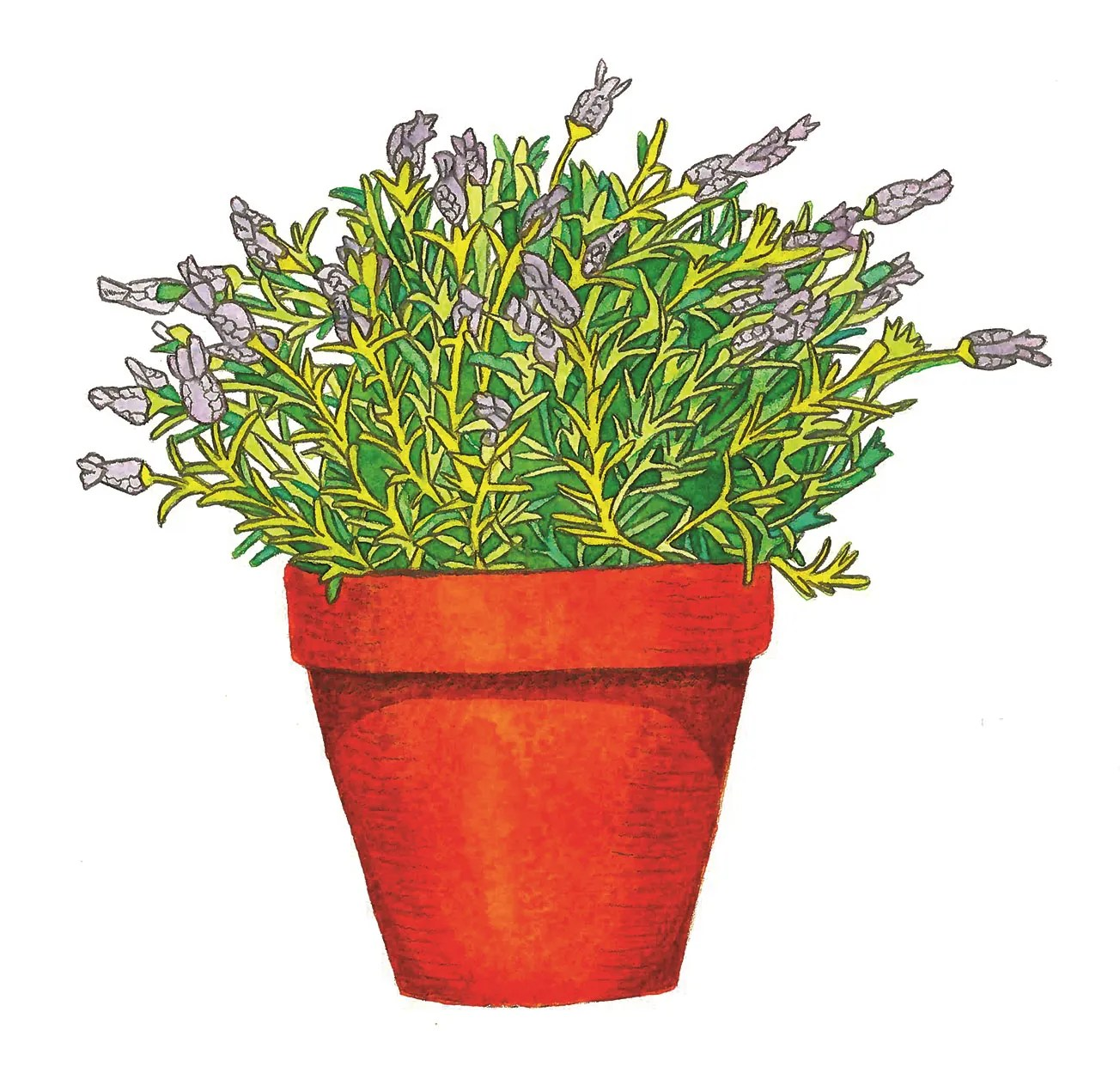Small House Plants With Flowers Miracle Alert These Plants Will Help You Sleep Better
