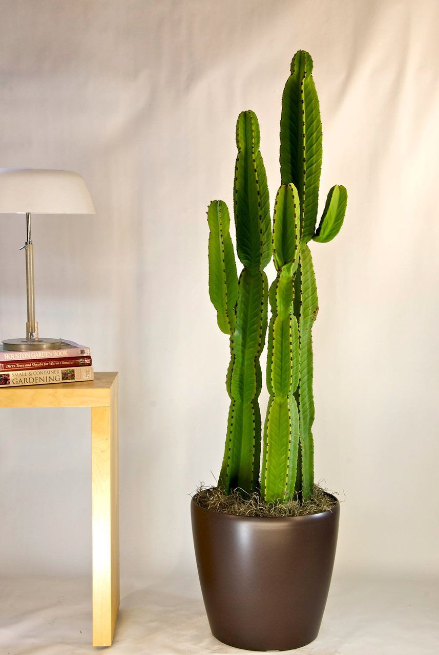 Small House Plants With Flowers 5 Indoor Plants And Flowers You Should Get Home This Summer