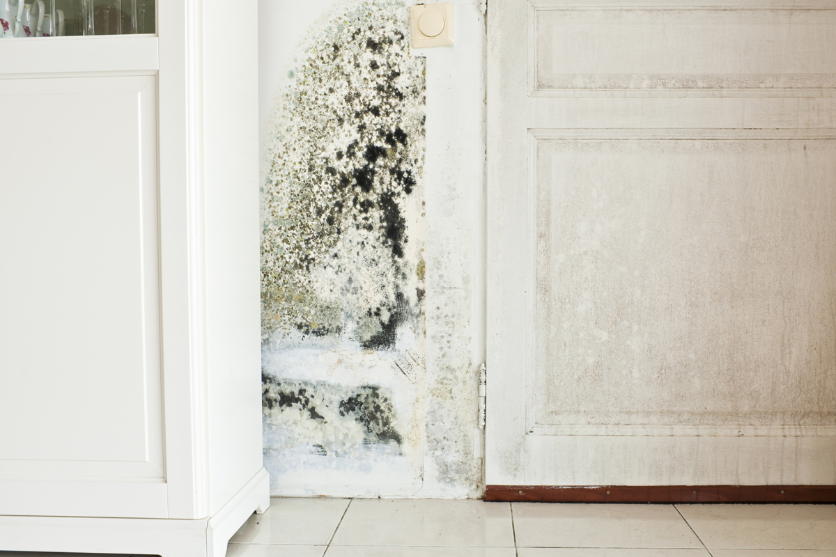 Black Mold Under Wallpaper What To Do If Your House Has Mold Or You Think It Does