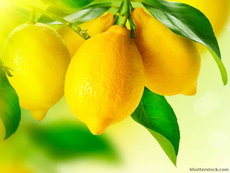 Quotes From The Yellow Wallpaper About Depression 7 Things You Never Knew Lemons Could Do Usual Uses For