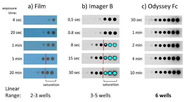 Improving Western Blot Reproducibility Biocompare Bench Tips