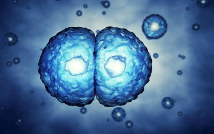 stamceller