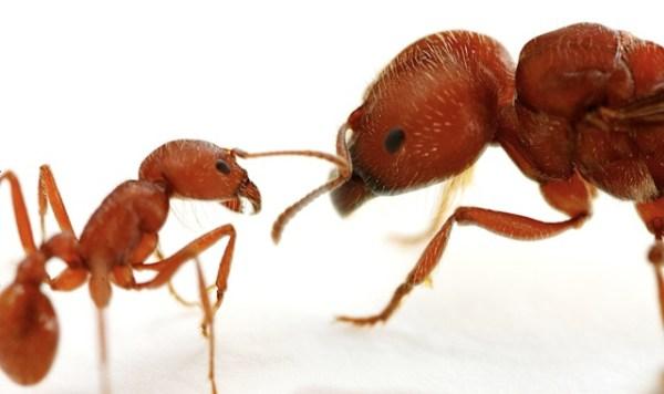 antlove