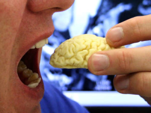 Image Fbvjvwuh1Yoaqs1 Edible-Chocolate-Brain-From-Mri-Scan