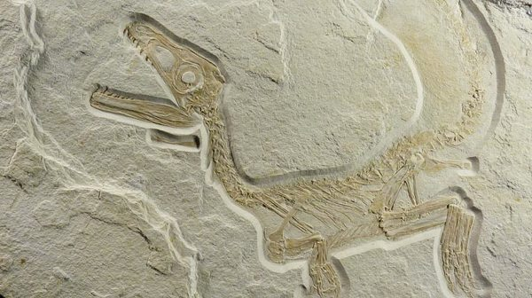 Wpf Media-Live Photos 000 558 Custom New-Species-Feathered-Dinosaur-Hints-Widespread-Feathers 55896 744X417
