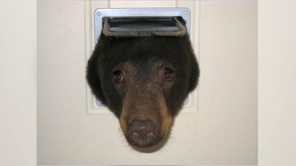 HT_bear_1_jt_150815_v4x3_16x9_992