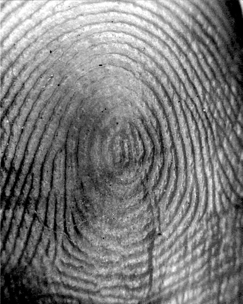 Fingerprint_-_Plain_Whorl