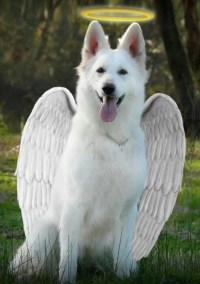 Dog Angel / Boing Boing