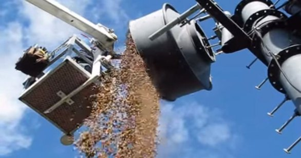 woodpeckers-stuff-acorns-into-antenna