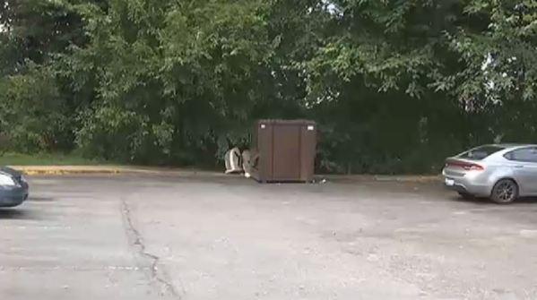 The Clown Dumpster of Greenville