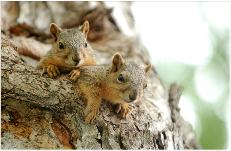 Photo courtesy Kendall Seifert/Squirrel Creek Lodge