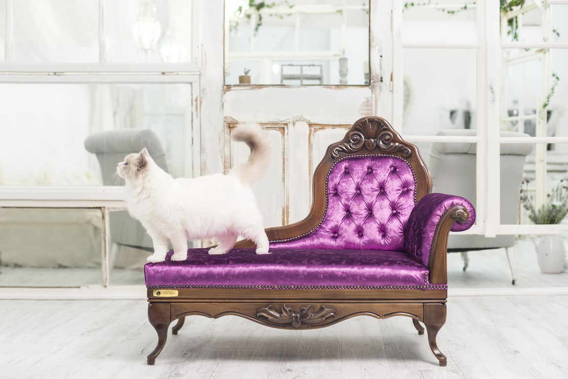 Pretty Cat Furniture Classy Sofas For Cats Boing Boing