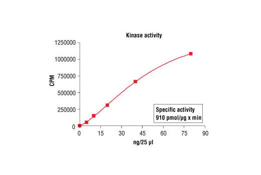 CST - HTScan® PKCε Kinase Assay Kit