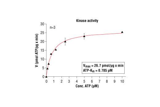 CST - HTScan® CDK2/CycA Kinase Assay Kit