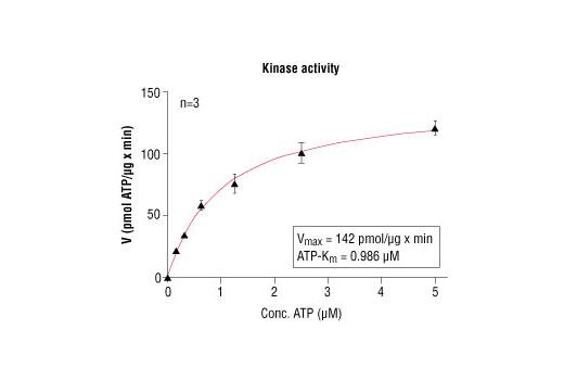 CST - HTScan® Src Kinase Assay Kit