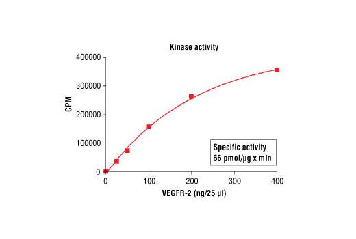 CST - HTScan® VEGF Receptor 2 Kinase Assay Kit