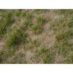 Small Crop Of Redo Backyard Grass