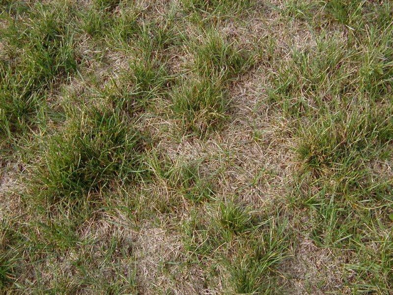 Large Of Redo Backyard Grass