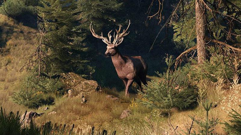 Witcher3 buck