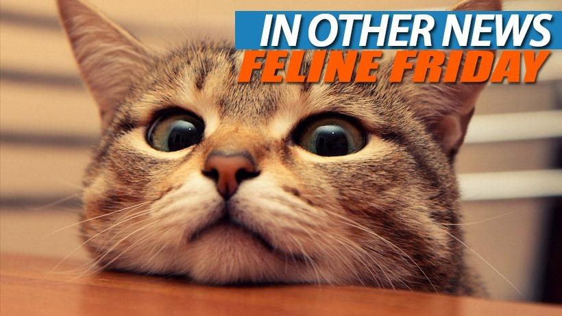 Feline-Friday
