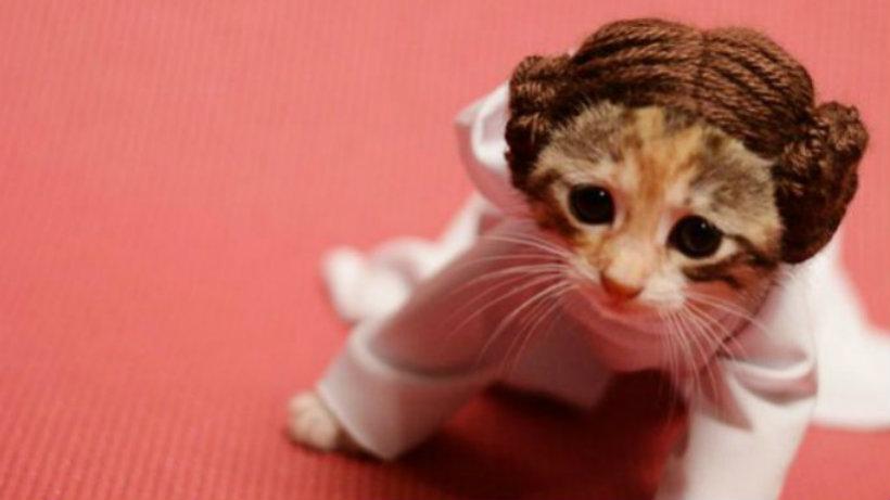 Leia kitty cosplay