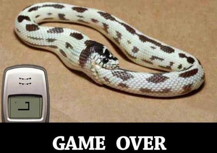 Snake game over