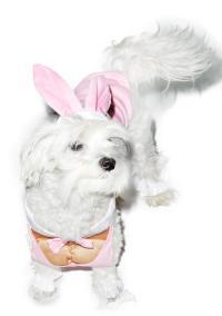 Hunny Bunny Dog Costume