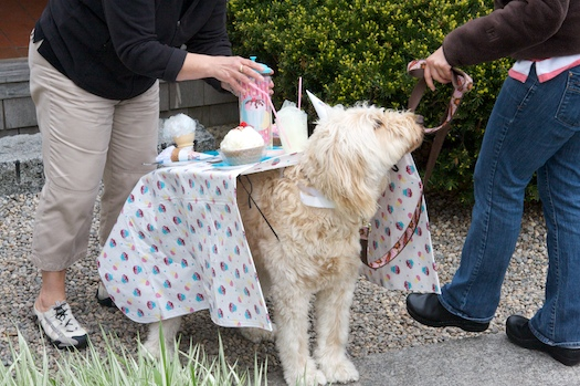 Tea Party Puppy