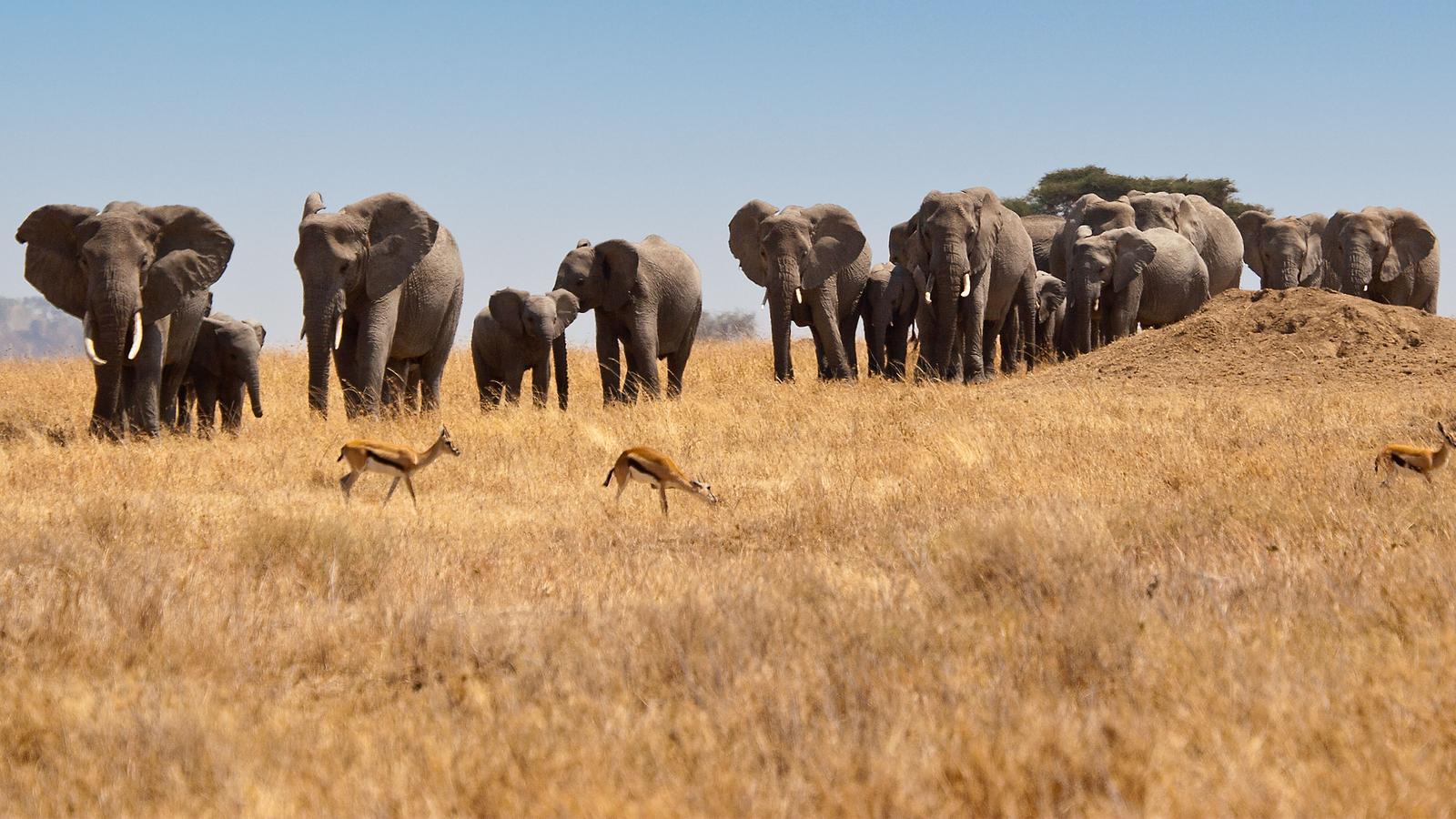 Victoria Falls Hd Wallpaper Falls Beaches Amp Serengeti Adventure Southbound In
