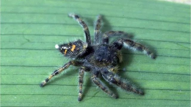 Scary Michigan spiders Brown recluse, 4 others to watch for