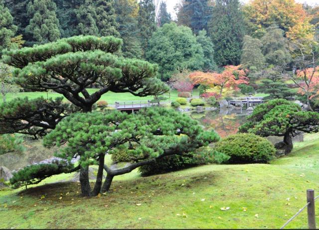 Les niwaki, arbres du jardin japonais  forme, taille, espèces - Jardin Japonais Chez Soi