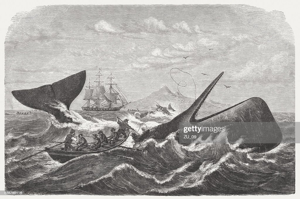 Whaling stock illustrations and cartoons getty images