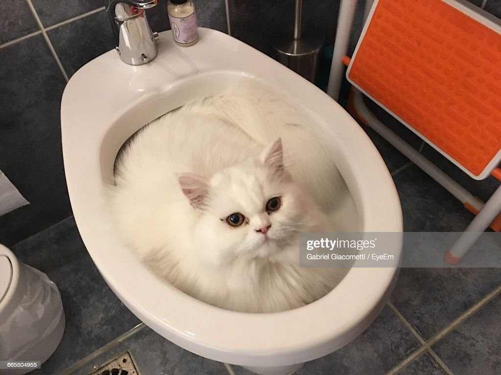 Commode Angle High Angle Portrait Of A Cat In Commode Stock Photo Getty Images