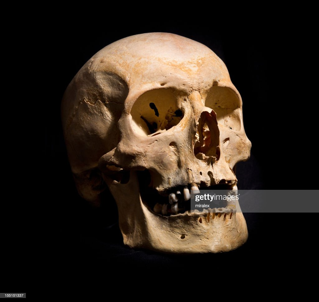 Human Skull Human Skull Stock Photo Getty Images
