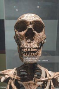 Homo Erectus Foto e immagini stock | Getty Images