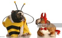 Two Dogs Wearing Halloween Costumes Stock Photo | Thinkstock