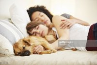 Young Female Couple And Pet Dog Sleeping On Bed Stock ...