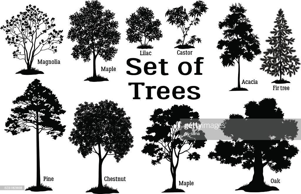 Tree Psd 365psdcom